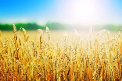 afaceri-agricultura